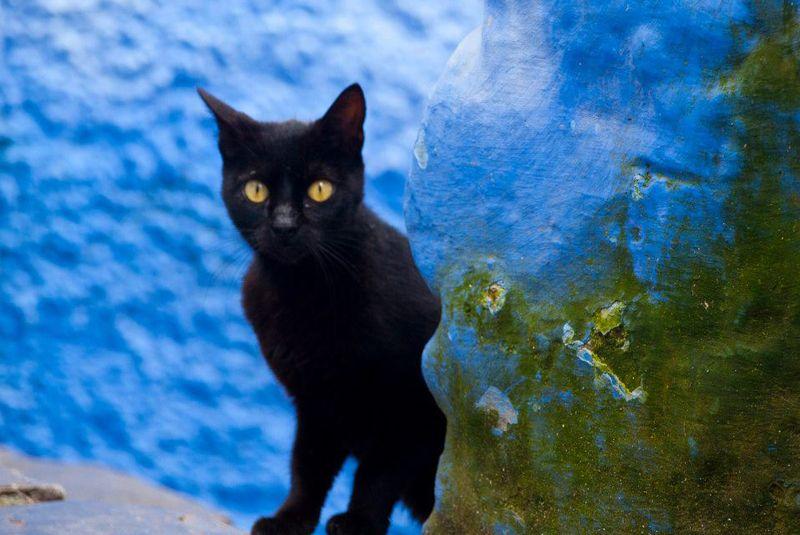 Chaoue: Gato negro y pared azul