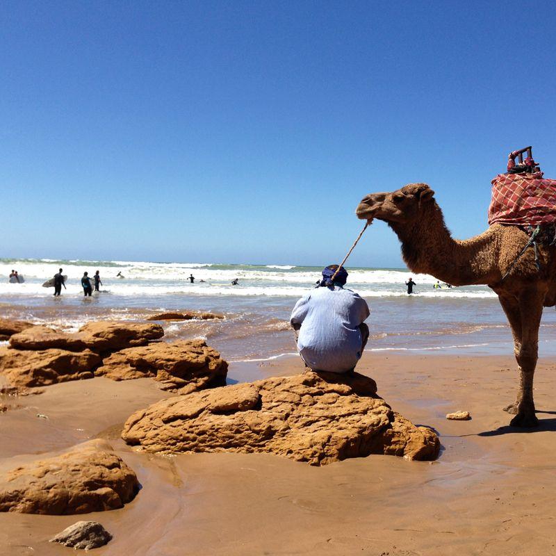 Costa Atlántica Sur. Surf y camellos en una playa de Marruecos.