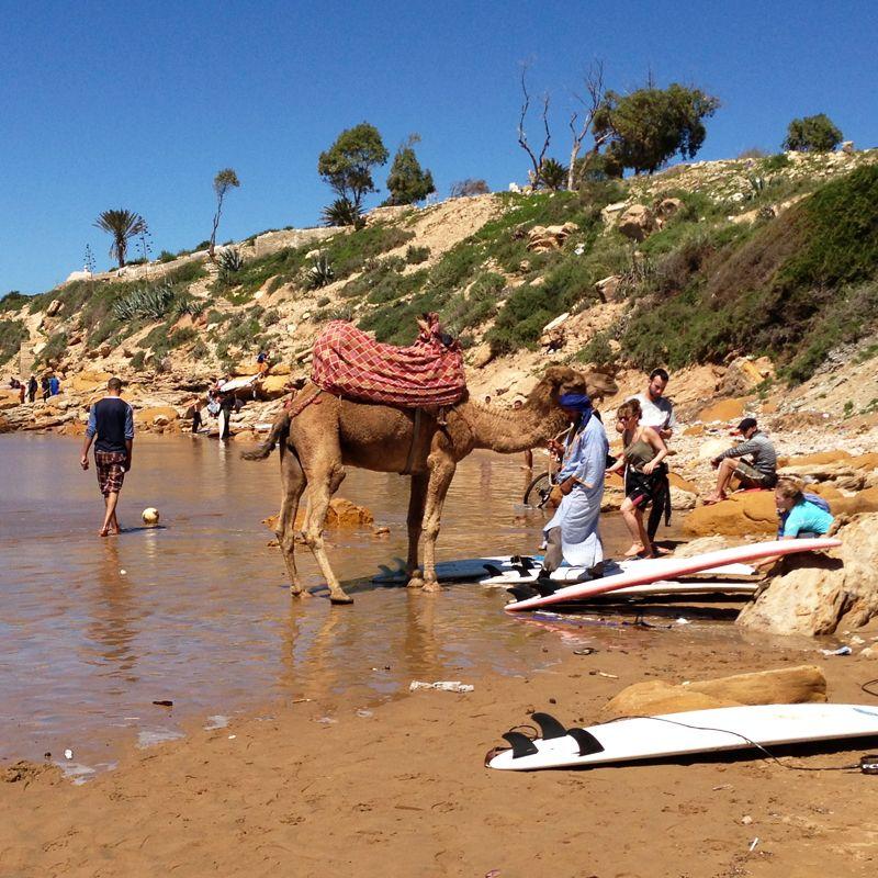Costa Atlántica Sur. Tablas de surf y camellos en una playa de Marruecos.