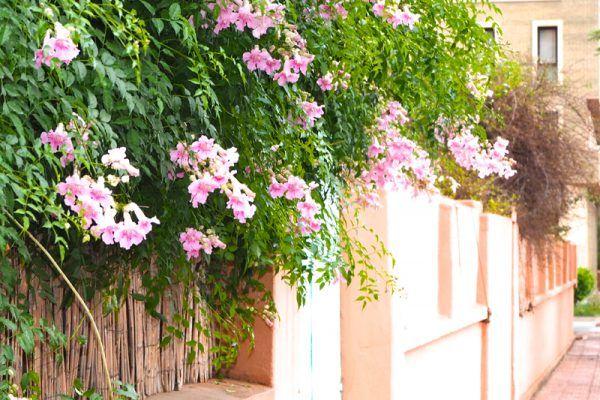 Fachada con flores en Marrakech