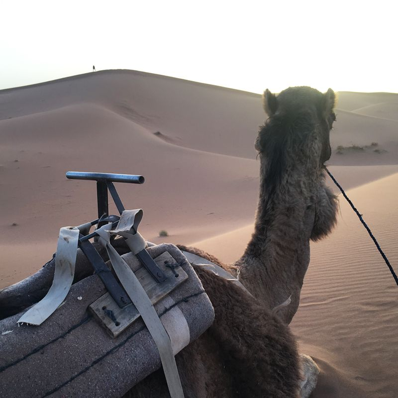 Paseos en dromedario por Marruecos con The Best Morocco.